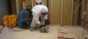 Professional Mold Removal Services