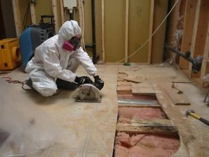 A Technician Conducting Mold Cleanup In An Attic